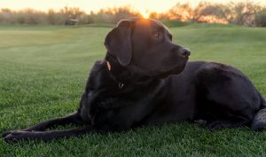 Black Lab FAQ - Age Question